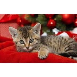 Cosmética Natural Para Ella Pack Navidad 8