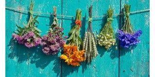 Plantas medicinales la más completa selección - Herbolario el Druida
