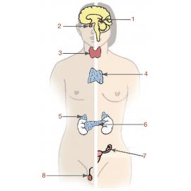 Hormonas y Tiroides