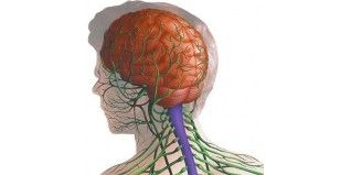 Suplementos para tu Sistema Nervios