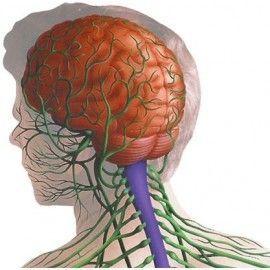 Trastornos Nerviosos
