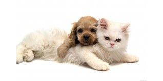 Mascotas - Herbolario el Druida